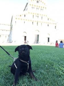 archie---hugo-13.8.2015-italie.-.---.jpg